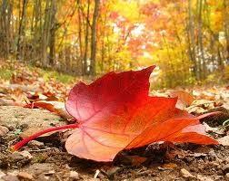 Autumn in Michigan – Promote Michigan