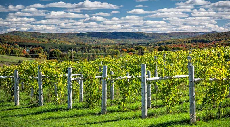 Tip Of The Mitt Wine Region