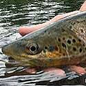 A Whopper of a Pure Michigan Fish Tale!